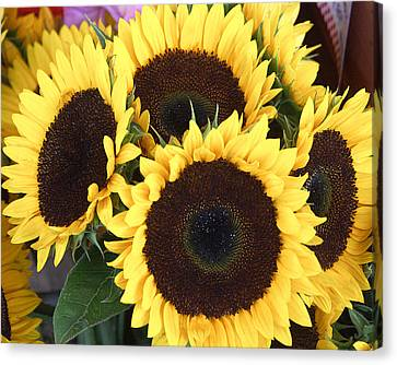 Sunflowers Canvas Print by Tom Romeo