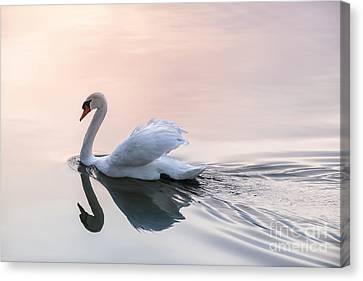 Sunset Swan Canvas Print by Elena Elisseeva