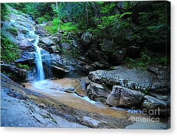 Swiftwater Falls  Canvas Print by Catherine Reusch  Daley