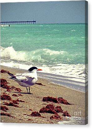 Terns On The Beach Canvas Print by Chris Andruskiewicz
