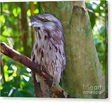 The Frogmouth Canvas Print by Judy Kay