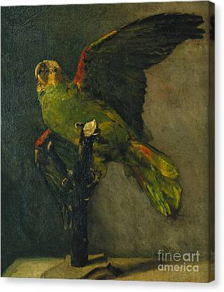 The Green Parrot Canvas Print by Vincent Van Gogh