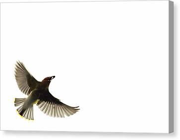 The Nesting Instinct Canvas Print by Andrea Kollo