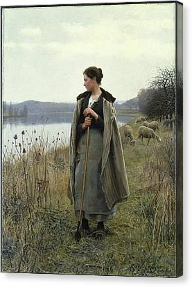 The Shepherdess Of Rolleboise Canvas Print by Daniel Ridgway