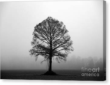 The Tree Canvas Print by Amanda Barcon