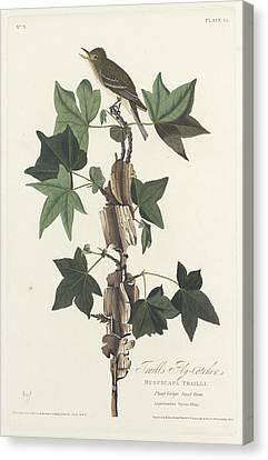 Traill's Flycatcher Canvas Print by John James Audubon