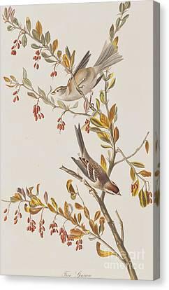 Tree Sparrow Canvas Print by John James Audubon