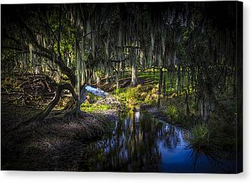 Twisted Oak Canvas Print by Marvin Spates