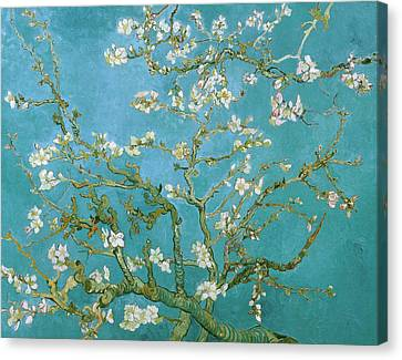 Van Gogh Blossoming Almond Tree Canvas Print by Vincent van Gogh