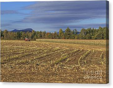 Vermont Cornfield  Canvas Print by Edward Fielding