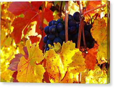 Vineyard 16 Canvas Print by Xueling Zou