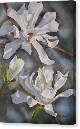 White Star Magnolia Blossoms Canvas Print by Sharon Freeman