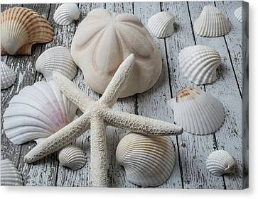 White Starfish Canvas Print by Garry Gay