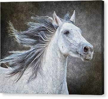 Wild At Heart Canvas Print by Ron  McGinnis
