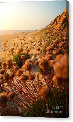 Wild Beach Canvas Print by Carlos Caetano