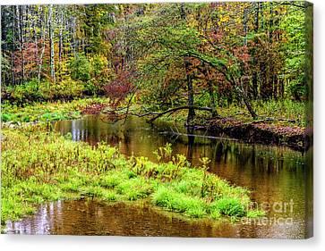 Williams River Autumn Rain Canvas Print by Thomas R Fletcher