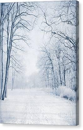 Winter Path Canvas Print by Svetlana Sewell