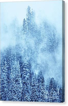 Winter Trees Canvas Print by Svetlana Sewell