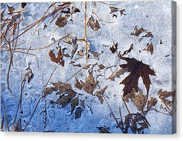 Winter's First Grip Canvas Print by Bill Morgenstern