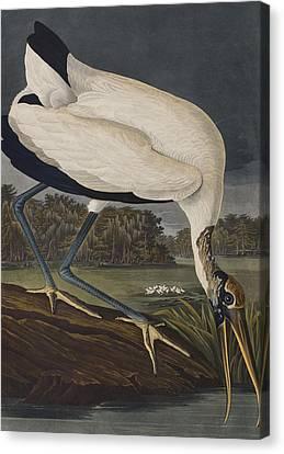 Wood Ibis Canvas Print by John James Audubon