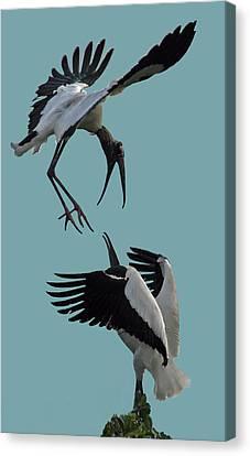 Wood Stork Pair Canvas Print by Larry Linton