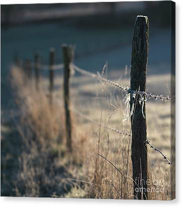 Wooden Posts Canvas Print by Bernard Jaubert