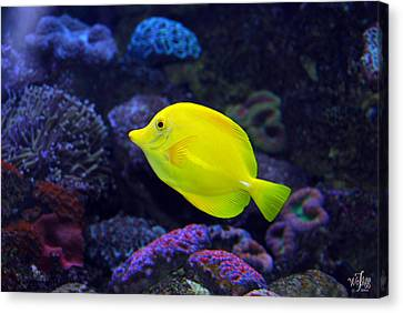 Yellow Tang Canvas Print by Thea Wolff
