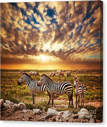 Zebras Herd On African Savanna At Sunset. Canvas Print by Michal Bednarek