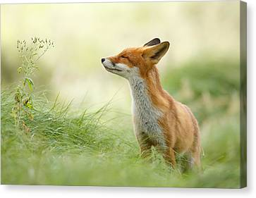 Zen Fox Series - Zen Fox Canvas Print by Roeselien Raimond