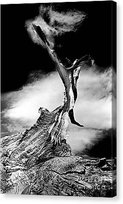 1000 Years To Create Canvas Print by Paul W Faust -  Impressions of Light
