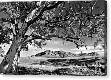 Wilpena Pound  Canvas Print by Bill  Robinson