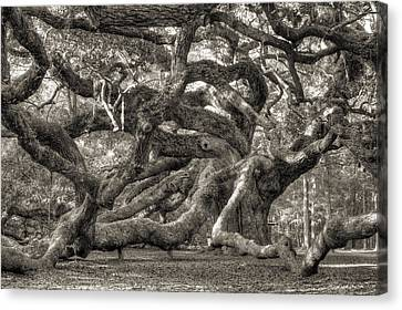 Angel Oak Live Oak Tree Canvas Print by Dustin K Ryan
