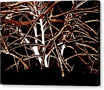 Grounded In Earth  - Series 1 Canvas Print by Debra     Vatalaro