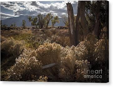 Eastern Sierras Canvas Print by Richard Smukler