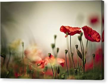 Poppy Meadow Canvas Print by Nailia Schwarz