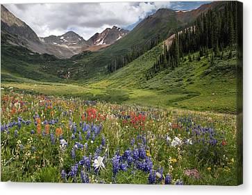 Alpine Flowers In Rustler's Gulch, Usa Canvas Print by Bob Gibbons