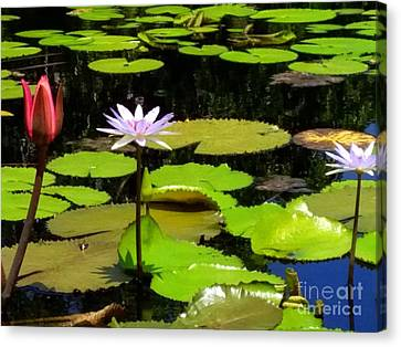 Aquatic Beauty Canvas Print by Irina Davis