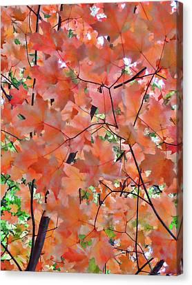 Autumn Foliage 1 Canvas Print by Lanjee Chee