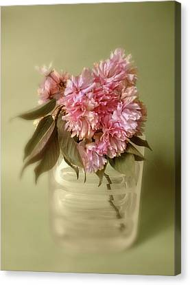 Blossom Canvas Print by Jessica Jenney