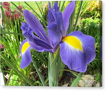 Blue Iris Canvas Print by Joyce Woodhouse