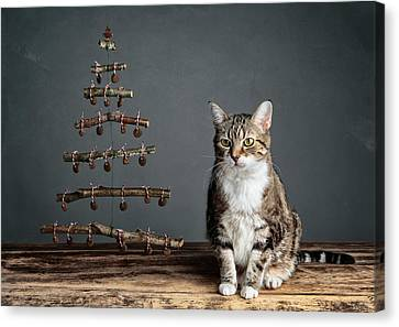 Cat Christmas Canvas Print by Nailia Schwarz