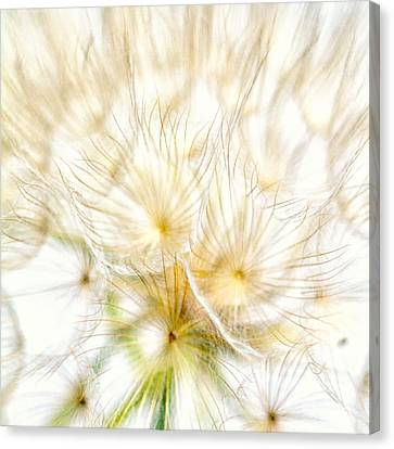 Dandelion Canvas Print by Stelios Kleanthous