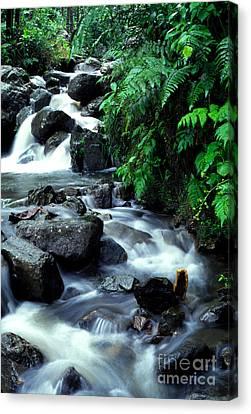 El Yunque Waterfall Canvas Print by Thomas R Fletcher