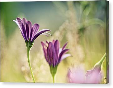 Flower On Summer Meadow Canvas Print by Nailia Schwarz