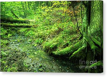 Forest Landscape With Water Stream Canvas Print by Jerzy Lekki