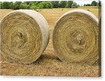 2 Freshly Baled Round Hay Bales Canvas Print by James BO  Insogna