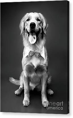 Golden Retriever Canvas Print by Oleksiy Maksymenko