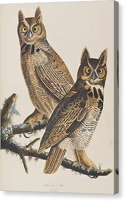 Great Horned Owl Canvas Print by John James Audubon