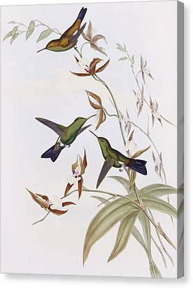 Hummingbirds Canvas Print by John Gould