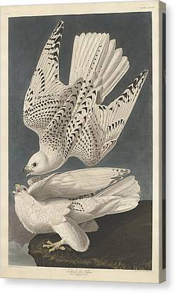 Iceland Or Jer Falcon Canvas Print by John James Audubon